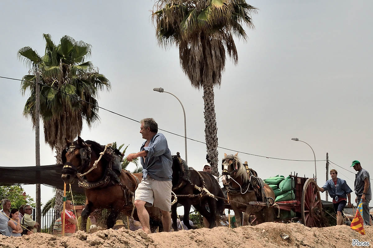 Tiro y Arrastre Algemesí 2016
