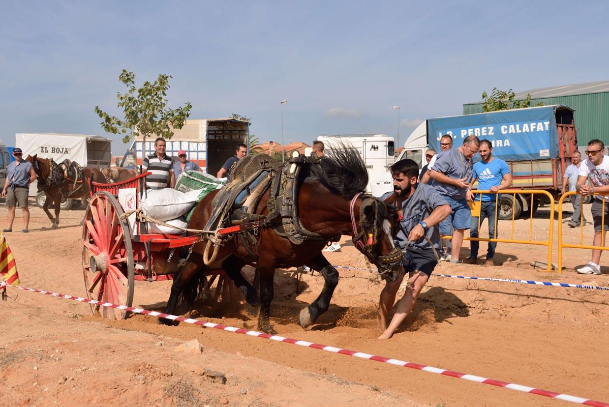 2015-09-26-villanueva-de-castellon_nk2_0796emilio-romera