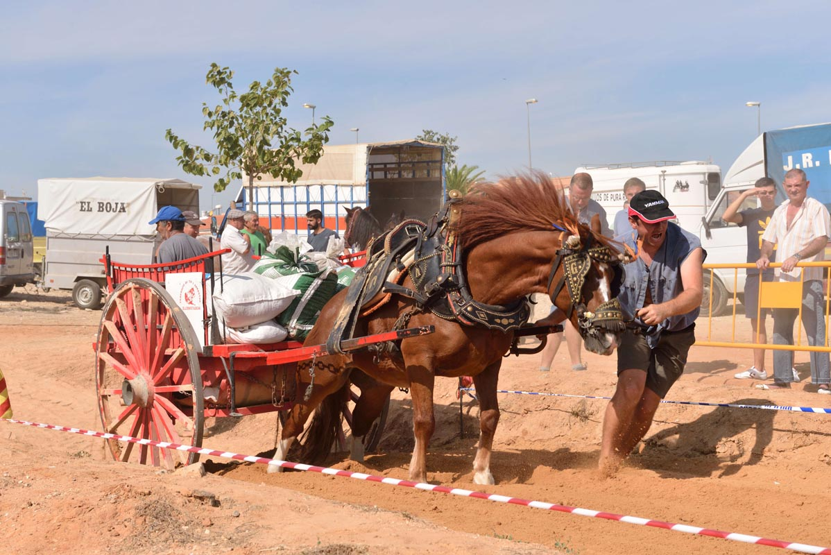 2015-09-26-villanueva-de-castellon_nk2_0886alex-campos