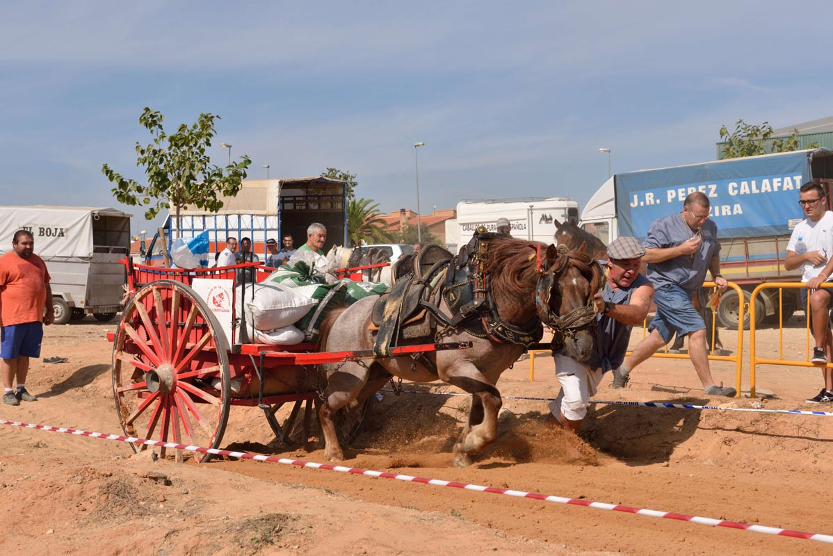 2015-09-26-villanueva-de-castellon_nk2_0924julio-brocal