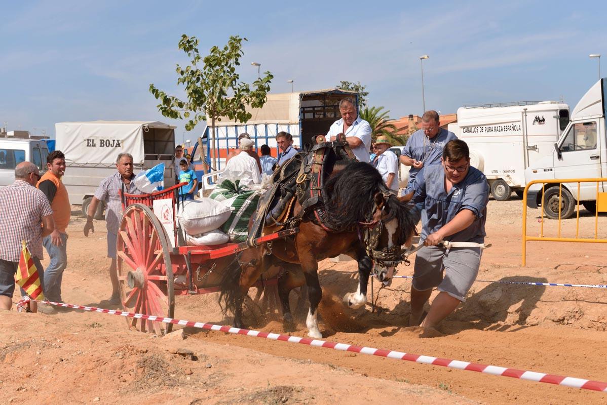 2015-09-26-villanueva-de-castellon_nk2_0937francis-cervero