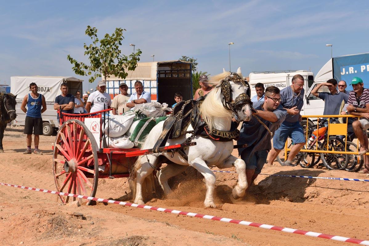 2015-09-26-villanueva-de-castellon_nk2_0987enric-cucarella