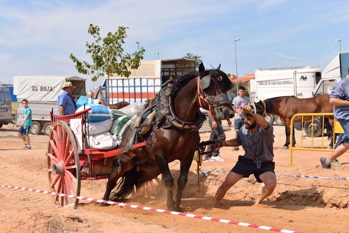 2015-09-26-villanueva-de-castellon_nk2_1092emilio-romera