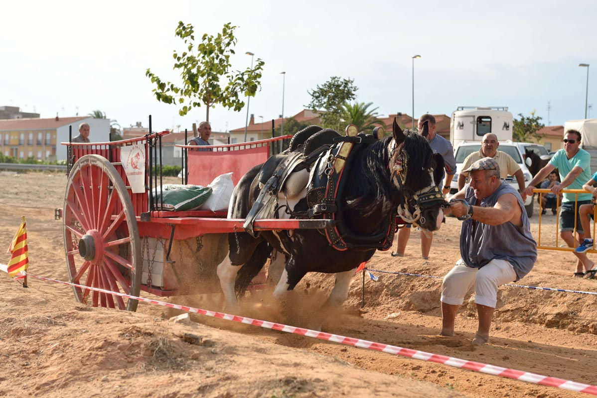 2015-09-26-villanueva-de-castellon_nk2_1161julio-brocal