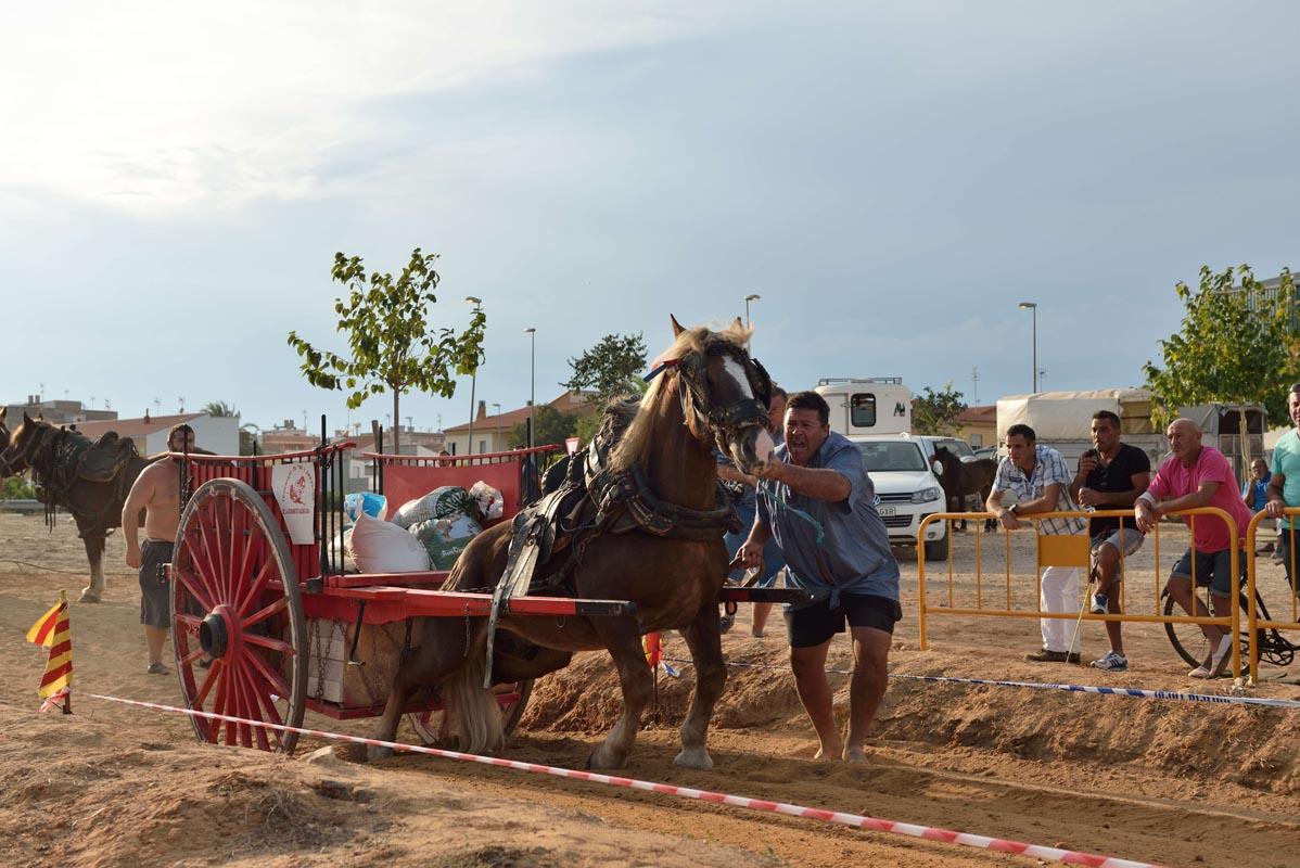 2015-09-26-villanueva-de-castellon_nk2_1256luis-miguel-palop