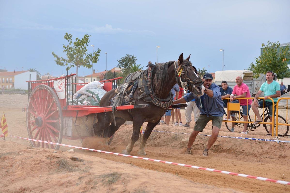 2015-09-26-villanueva-de-castellon_nk2_1352paco-ferrer